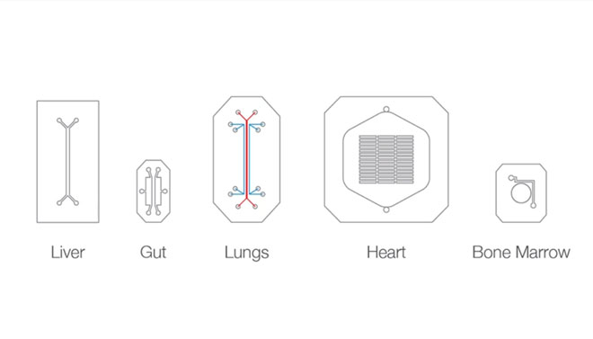 organs-on-a-chip-wyss-institute-1