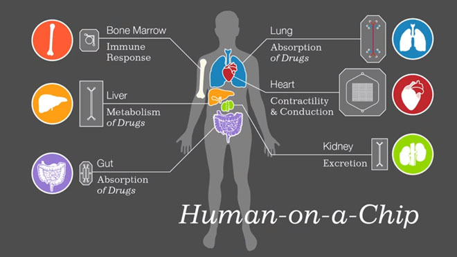 organs-on-a-chip-wyss-institute-2