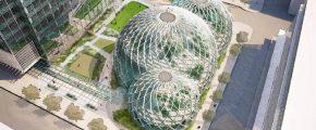Amazon biosphere