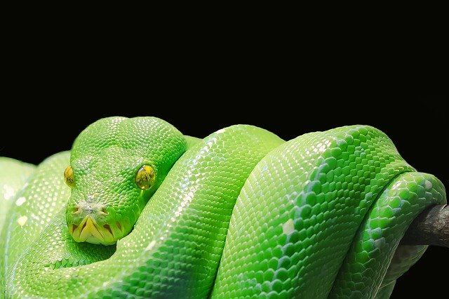 New Python 3.6 Release Addresses a Growing User Base