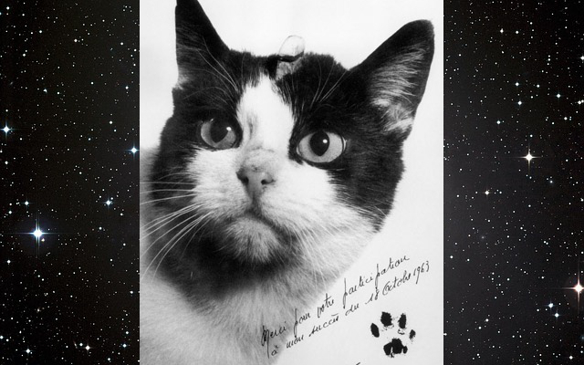 Remembering the First Cat in Space