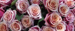 Bouquet_de_roses