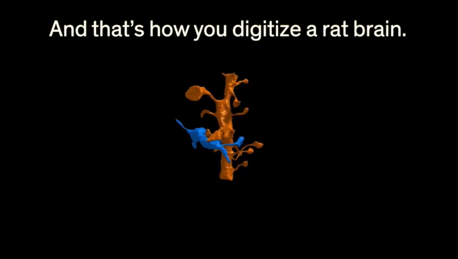 Rat brain image (from IEEE Spectrum video)