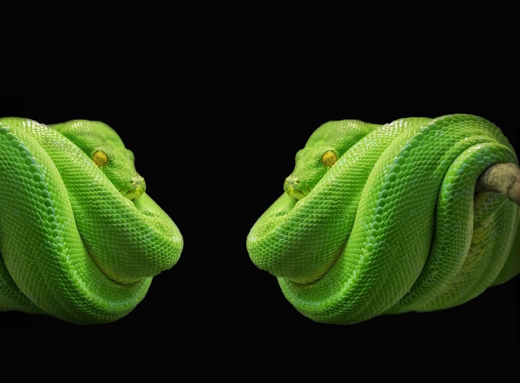 Bid Adieu to Python 2 and Get Ready for Python 3 - The New Stack