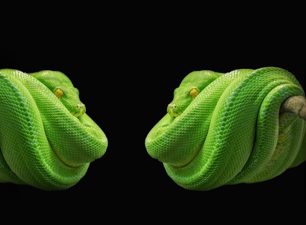 Bid Adieu to Python 2 and Get Ready for Python 3