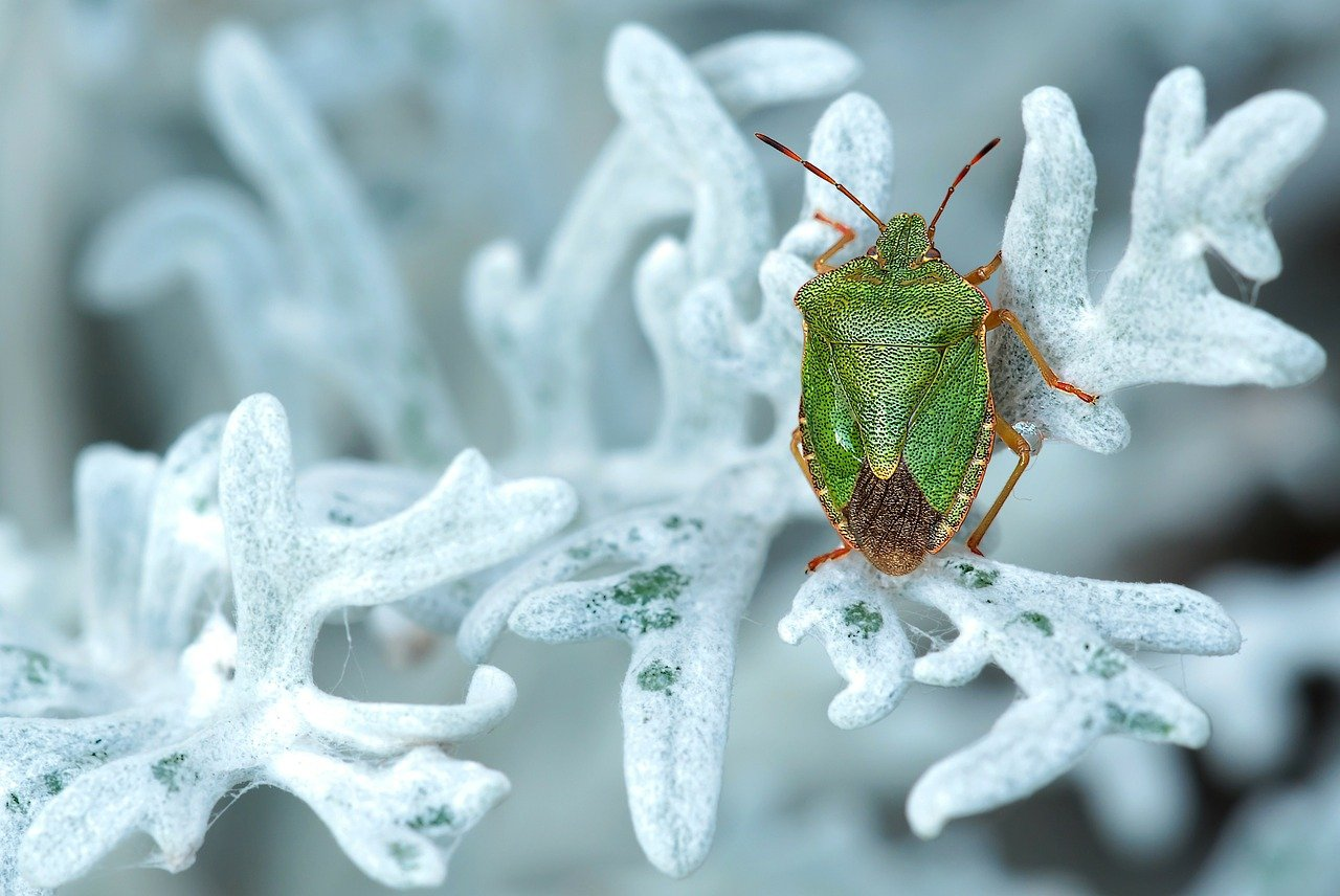 Spot Bugs as You Code with Embold's AI-Enabled Static Analysis and Visualization Tool