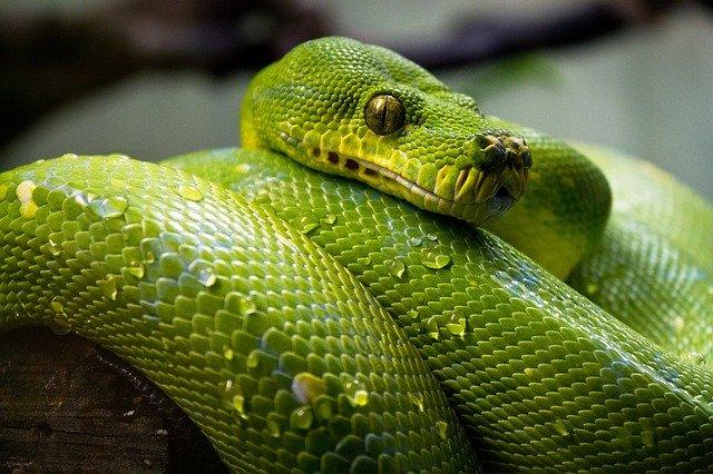 Frustration Mounts over Python 3 Migrations