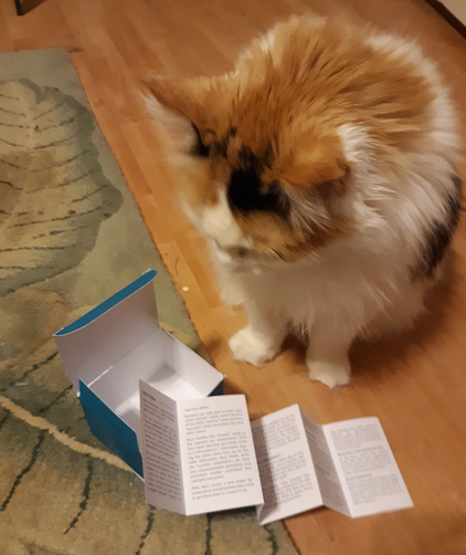 Angel the Cat reads instructions for Sysdig game Cards Against Containers