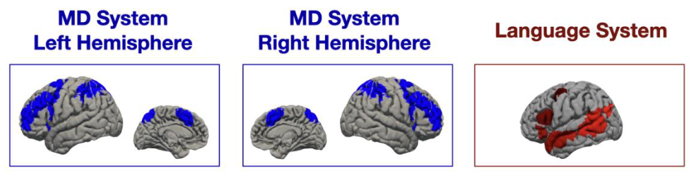 Screenshot from MIT-Tufts paper on fMRI brain scans of code comprehension (brains).